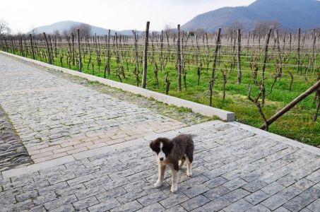 Our winery pooch, Zippy!